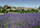 Two-thirds of France's perfume fragrances are produced in Grasse